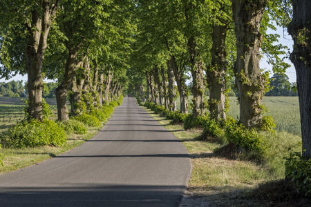 east germany: Picturesque lime tree alley in East Germany