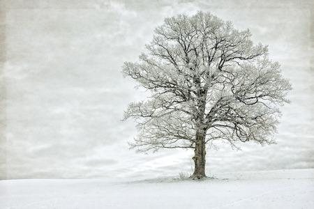 Enkele boom in de winter bedekt met rijp