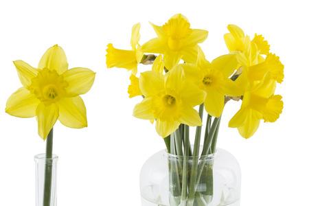 Daffodils isolated on white background Stock Photo