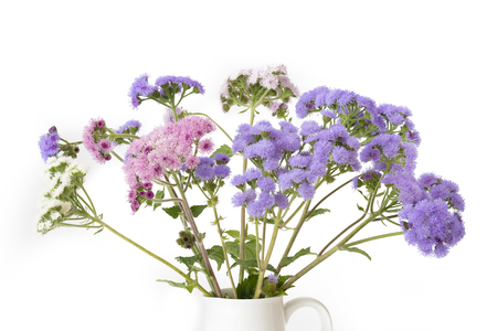 Bouquet of ageratum houstonianum flowers on white stock photo bouquet of ageratum houstonianum flowers on white stock photo 106194169 mightylinksfo