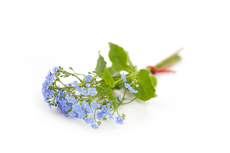 Bouquet of Forget me not flowers on white background