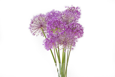 Bouquet of allium flowers isolated on white background 免版税图像