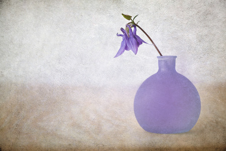 Blue aquilegia vulgaris flower in a vase with texture overlay Stockfoto