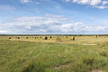 Typical summer landscape in Belarus (White-Russia) in summer with straw bales 스톡 콘텐츠