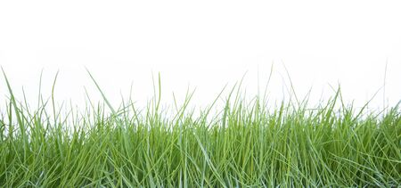 Fresh grass on white background Stockfoto