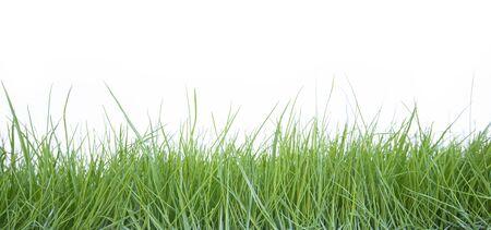 Fresh grass on white background Foto de archivo