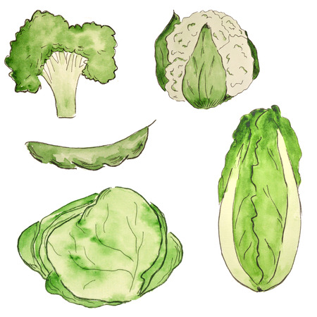 Watercolor set of vegetables. Bright types of cabbage, broccoli. Vegetarian food