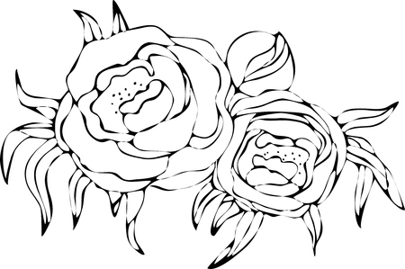 Peony flowers drawing and sketch with line-art on white backgrounds. Silhouette