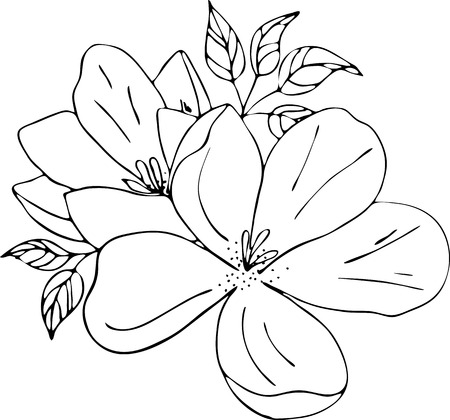 Magnolia flowers drawing and sketch with line-art on white backgrounds. Silhouette Stok Fotoğraf - 128302958