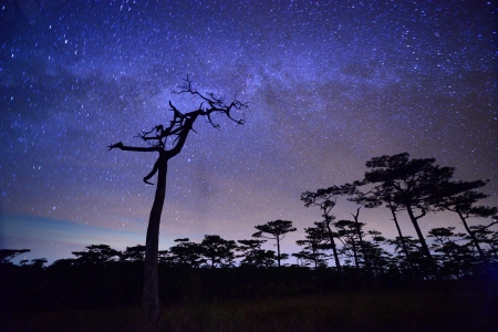 Milky way over pine forest photo