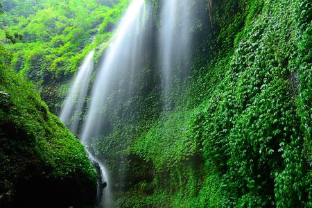 Madakaripura Waterfall-Deep Forest Waterfall in East Java, Indonesia photo