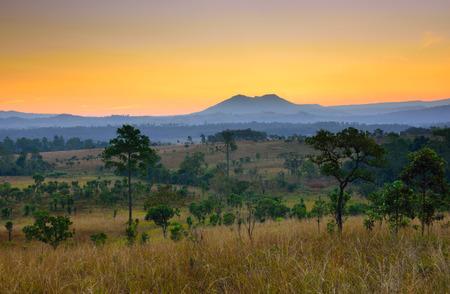 Tropical forest landscape at sunrise Reklamní fotografie