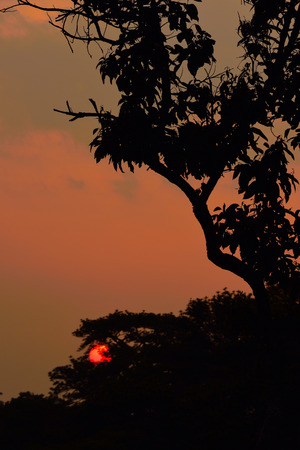 Silhouette of tree at set