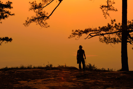 Silhouette of pine tree at sunrise