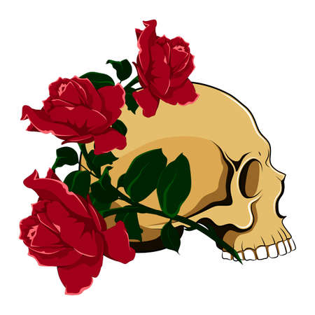 Color vector image of a skull with three roses. Vector image on white background.