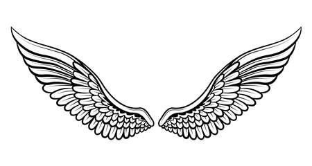 Vector image of wings on a white background. Ilustração