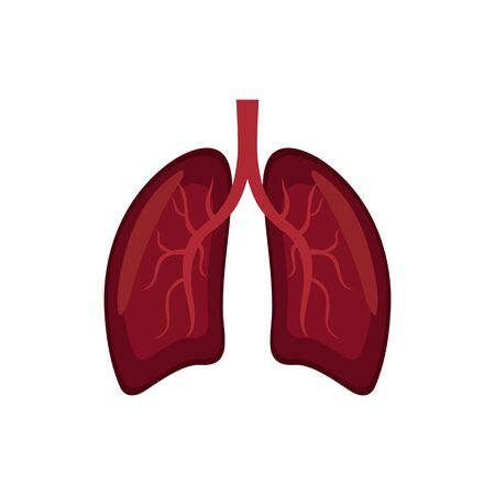 Human lungs in flat vector illustration EPS 10