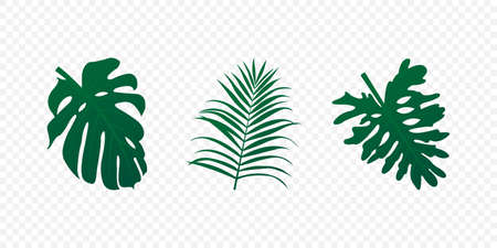 Tropical realistic leaves set. Green exotic palm and trees leaf isolated Vector illustration EPS 10 Иллюстрация