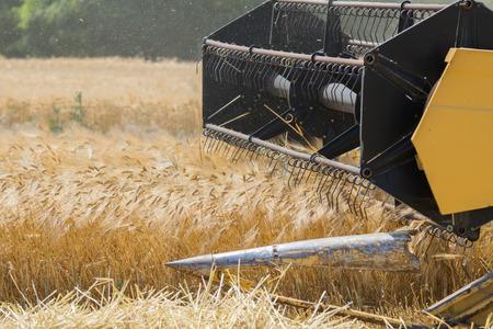 Harvesting barley with combine harvester