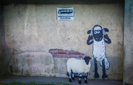 grafiti: Sheep grafiti with real sheep