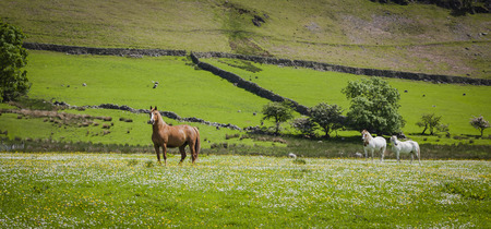 cumbria: Typical landscape with horses in Lake District, Cumbria