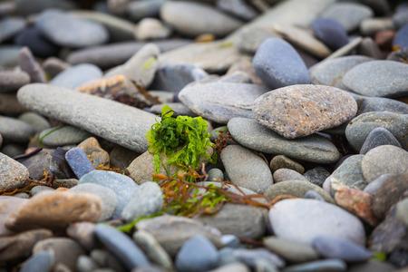 Macro of stones on a shingle beach