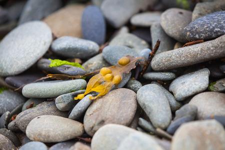 shingle beach: Macro of stones on a shingle beach