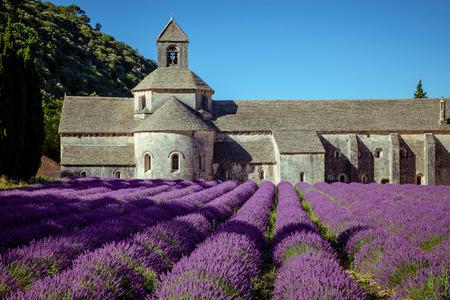 senanque: Abbey Senanque Provence France