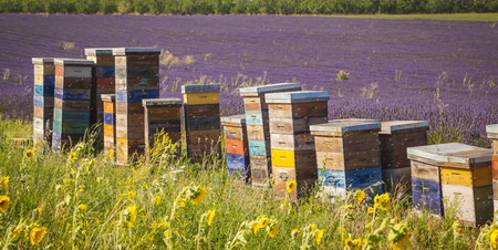 Beehive, Provence France