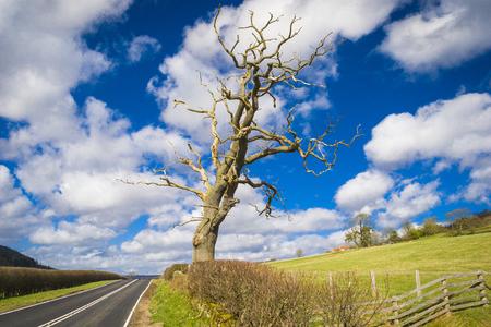 moors: North York Moors landscape Stock Photo