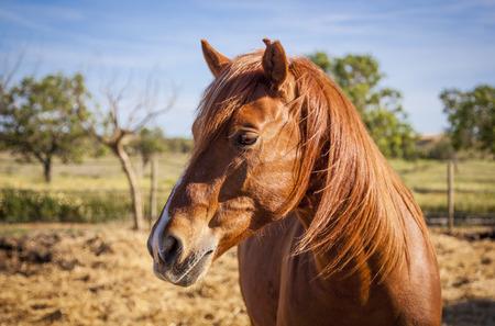 mallorca: Horses on the pasture, Mallorca