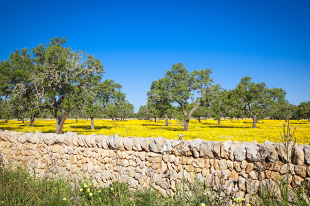 mallorca: Mallorca fields and meadows Stock Photo