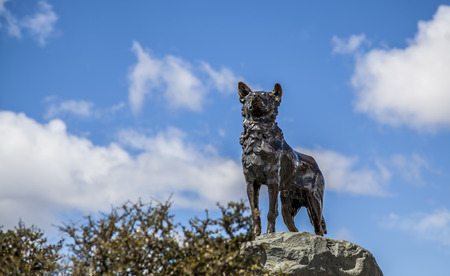 tekapo: Statue of shepherd dog in Lake Tekapo Stock Photo
