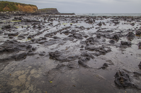 petrified fossil: Petrified Forest Catlins New Zealand Stock Photo