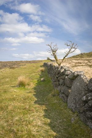 dry stone: Dry stone wall with tree in Dartmoor Stock Photo