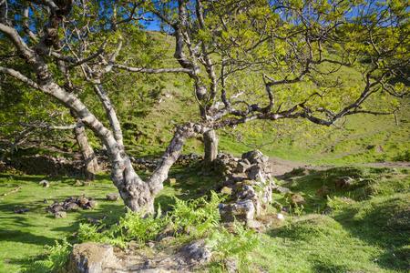 skye: Trees and stone wall in Fairy Glen, Isle of Skye, Scotland