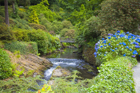 Wonderful garden and flowers in Wales
