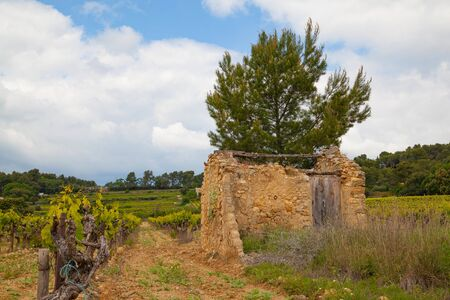 Ruins at a vineyard in Provence Standard-Bild - 128324035
