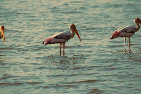 birds in water Editorial
