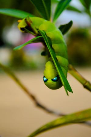 gusano: mariposa del gusano verde en las hojas aisladas en blanco. Foto de archivo