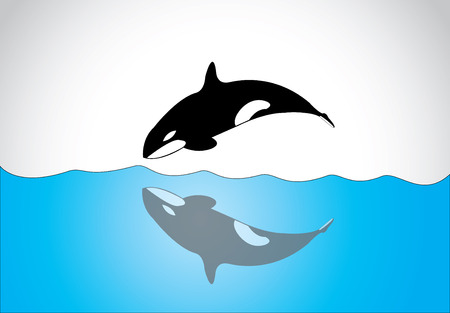 orcinus: big young happy free killer whale jumping out of ocean sea surface  A black and white orca killer whale swim and jumping out of sea surface and diving back in with its shadow in the sea - concept art