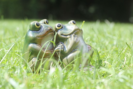 good evening: young frog couple sitting together among green grass on a bright day. two loving frogs looking up in hope and love on a summer holiday morning or evening - good life concept