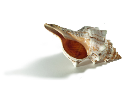 shell of a sea mollusk with picturesque bumps, pattern, stripes and specks isolated