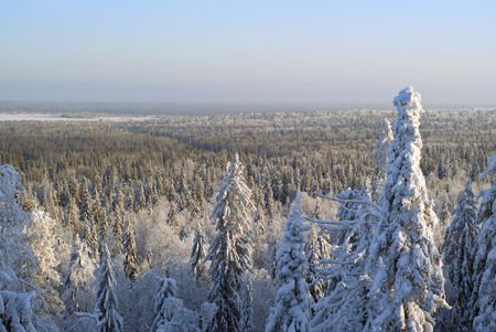 View from the top of the mountain to the winter coniferous forest to the horizon on a clear frosty day with snow-covered trees in the foreground