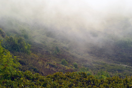 cloudy haze and shreds of fog low over wet vegetation in a gloomy mountain valley in rainy weather