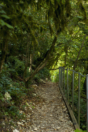 fenced path in a forest on a mountain slope