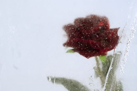 Red rose, frozen in a cloudy ice with bubbles, closeup