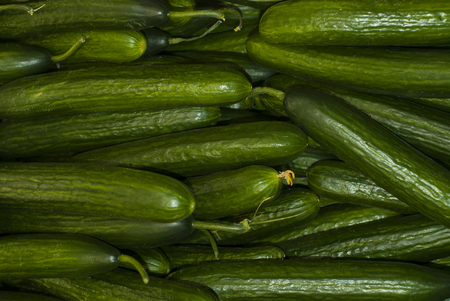 background - long smooth green slicing cucumbers closeup