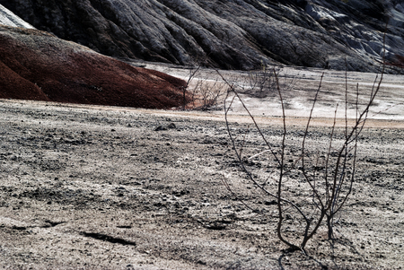 dead bushes in the gloomy weathered desert landscape of dumps of mine workings
