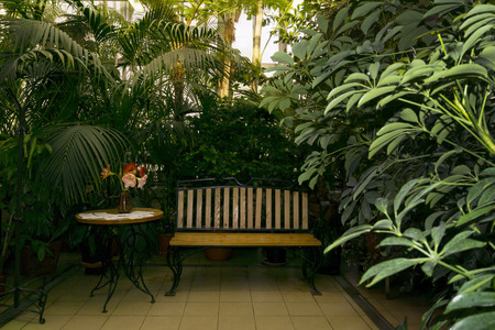 bench and table for visitors in the interior of the greenhouse among tropical plants